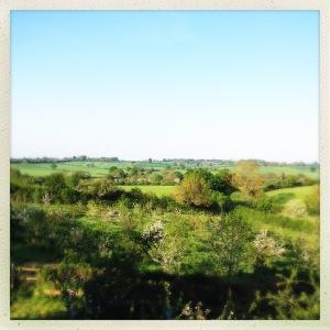 View_farm